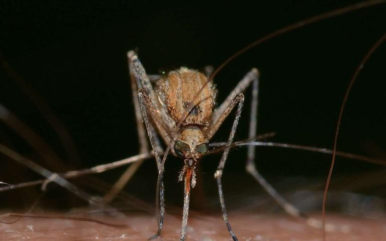 Genetically%20Modified%20Mosquitoes%u2014Approved%20For%20Release%20In%20The%20US